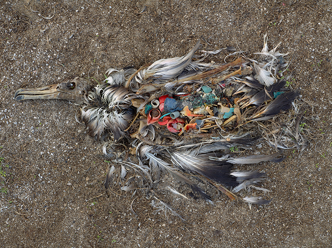 CF000478 Unaltered stomach contents of a Laysan albatross fledgling, Midway Island, 2009 (from the series Midway: Message from the Gyre). © Chris Jordan